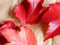 vata-jesen